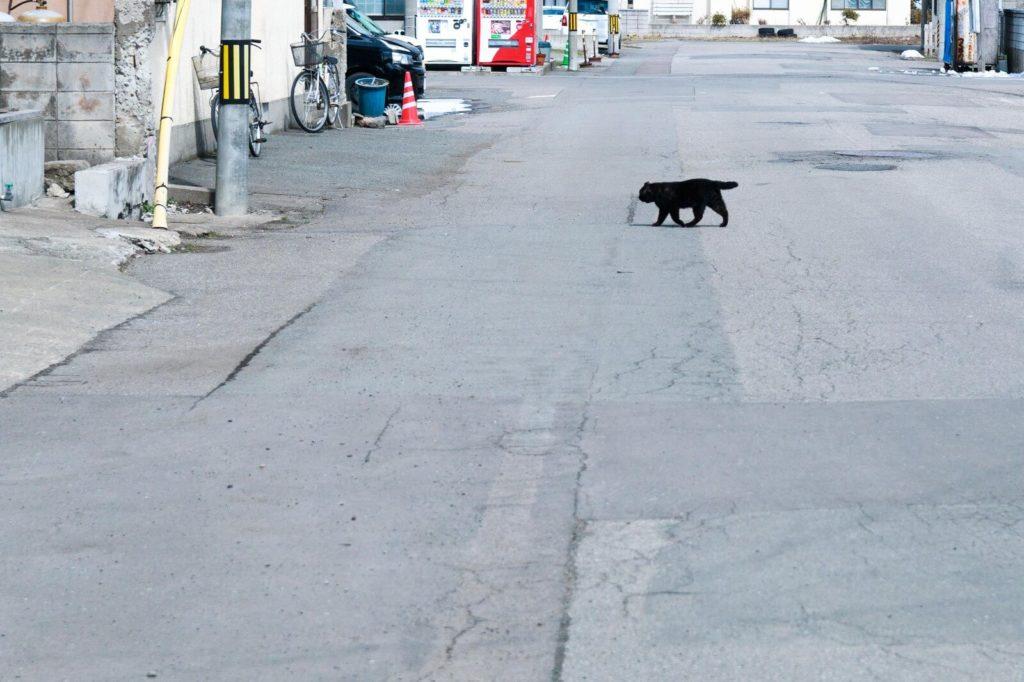 道を横切る黒猫