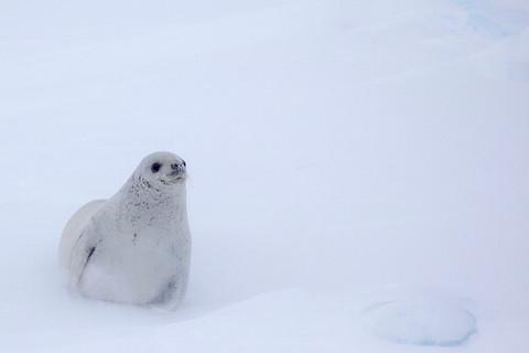 雪が積もる寒い銀世界でも癒しの表情で心温まるゆるふわ系