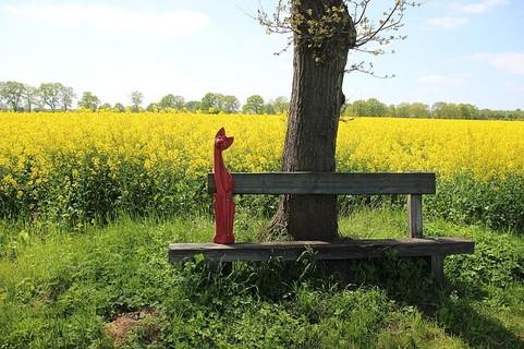 春野菜を代表する菜の花を摘みに畑まで