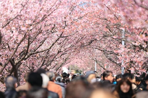 満開の桜並木を通るたびに思い出す学校を卒業したての頃の自分