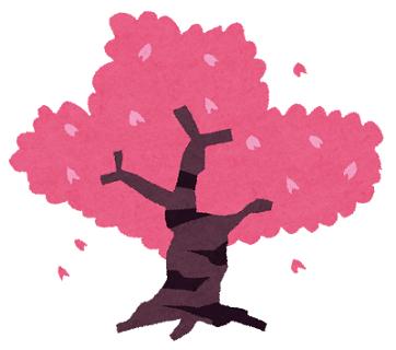 満開に咲いた桜の木のイラスト