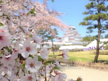 鶴ヶ城をバックにした満開の桜