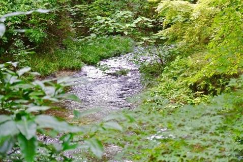 マイナスイオン効果で嫌さえる白川水源
