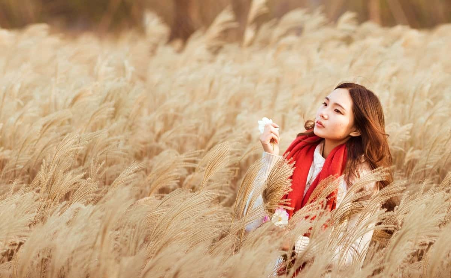 ススキ畑でひとり人恋しさを感じている女性
