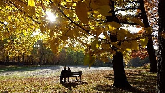 穏やかな秋の午後に公園のベンチで肩を寄せ合い愛を語らう男女
