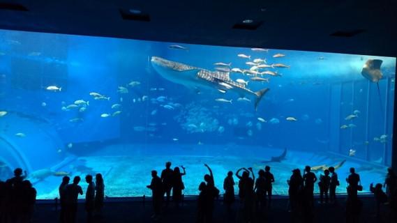 ジンベイザメが優雅に泳ぐ美ら海水族館