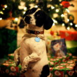 クリスマスツリーの前に立つ子犬