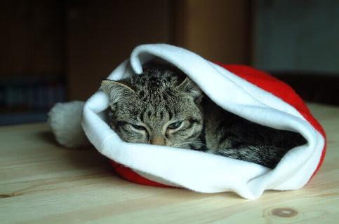 サンタクロースの帽子の中にすっぽりと入りふて寝するトラ猫