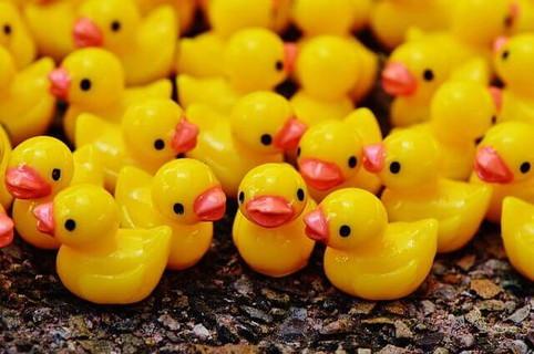 地面いっぱいに集められた黄色いアヒルのおもちゃ