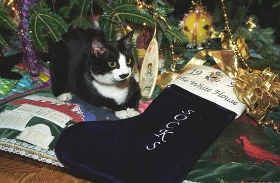 クリスマスツリーの下にうずくまる黒猫と黒いくつした