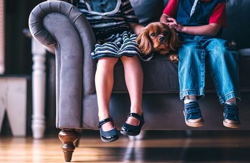 ソファに並んで座る男のと女の子とその間を邪魔するように座っている茶色のキャバリア