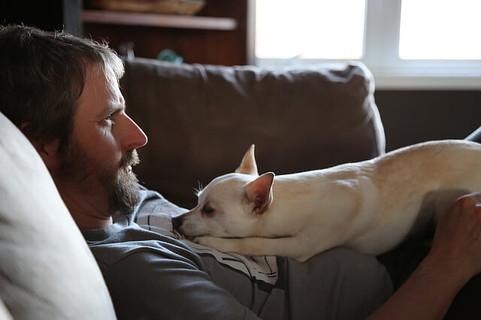 今年もひとりの年越しか…と絶望し白い犬をお腹の上に乗せてソファに寝そべるひげもじゃの男性