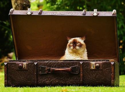 古い大きなレザーのトランクの中に入り込み目を細め耳を立てて感覚を研ぎ澄ませる猫