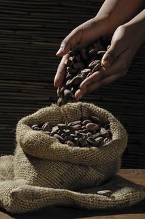 人の手から麻袋に落とされる古代から大切に扱われてきたカカオ豆