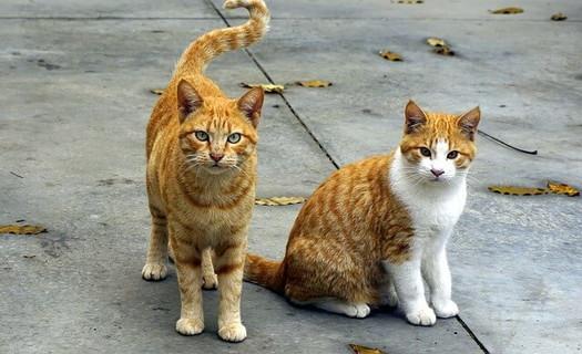 どこで?どうやって!?と疑問を含めた目線でこちらを見つめる猫2ひき