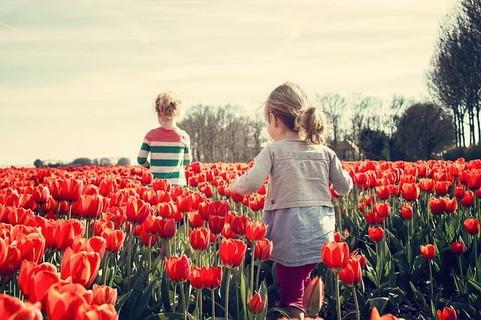 赤いチューリップ畑を歩くこれから先たくさんの出会いが待っている女の子たち