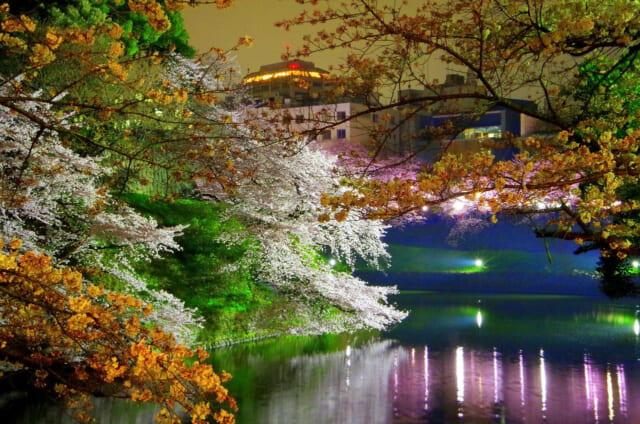 大人のデートにぴったりの夜桜でムーディな雰囲気になった目黒川