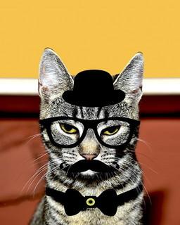 蝶ネクタイやメガネ、ヒゲを描いて紳士風にイメージチェンジしたシマシマの猫