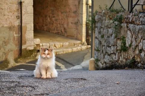 無言で道端に座るふてくされた顔をする猫