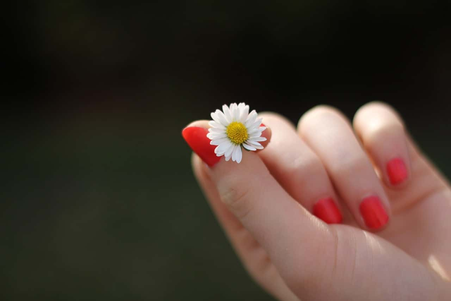 やり場のない気持ちを抑えるために花をもてあそぶ女性の手元