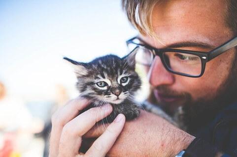 小さな子猫を優しく手で包み込むヒゲもじゃの男性