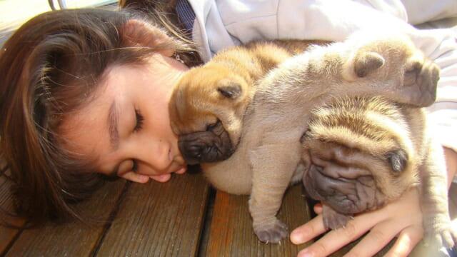 パグの子犬を抱きしめて一緒に眠る女の子