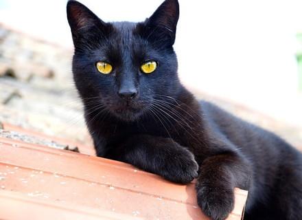 神経を研ぎ澄まし黄色い目を大きくひらく真っ黒な猫