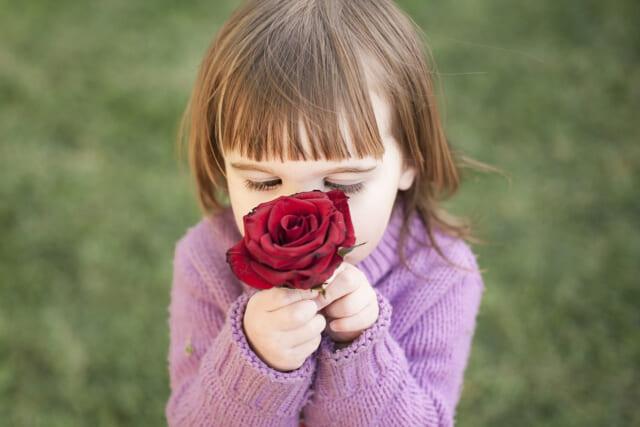 赤いバラの花を顔を近づけるピンク色のセーターを着た小さな女の子